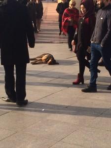 dead_dog?